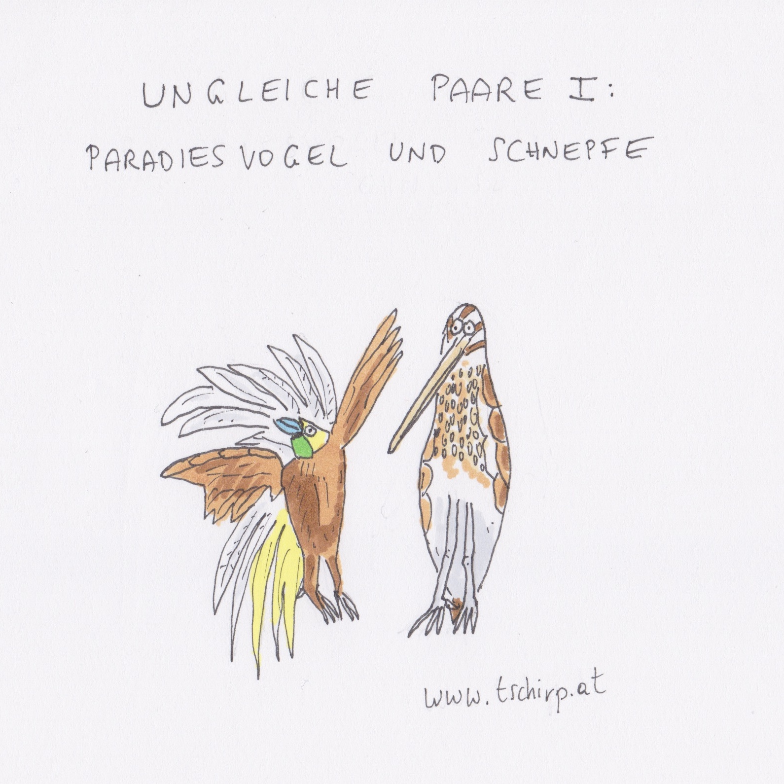 Hochzeit, Mai, Schnepfe, Paradiesvogel, Cartoon, Cartoons, Comic, Comics, Wellensittich