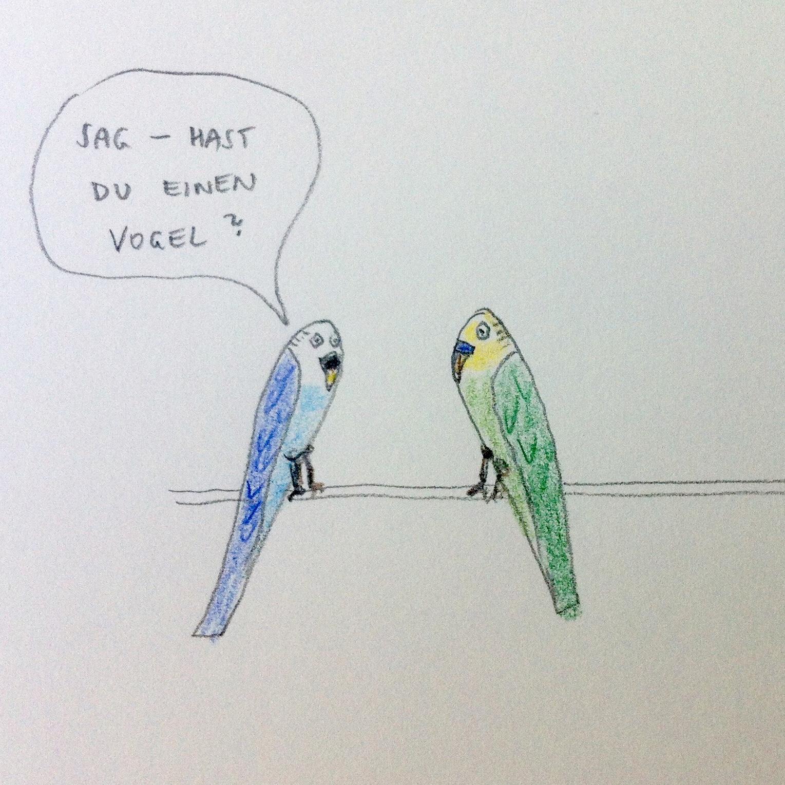 Wellensittiche, Vogel