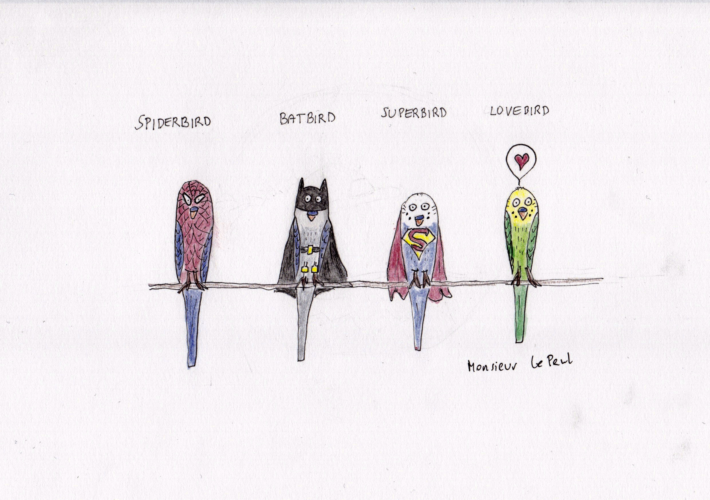 Wellensittiche, Spiderman, Superman, Batman, Lovebird